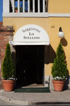 Lo Stellino Young, Siena