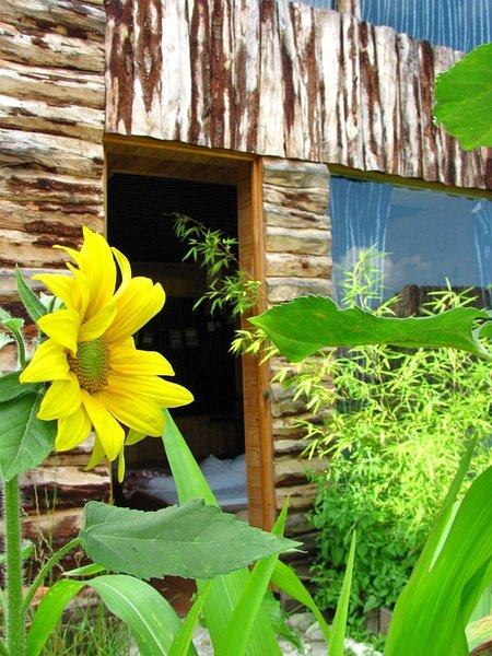 Yellow canary lodge Dali, Νταλί