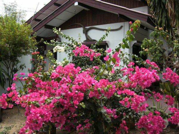 Orchid Home, Tha Tako