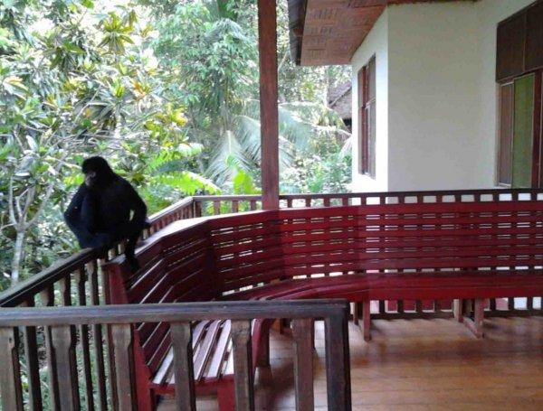 Tarantula Eco-Hostal, Puerto Maldonadas