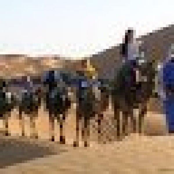 Les Pyramides Hostel, Merzouga