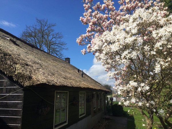 The Black Sheep Hostel , Giethoorn